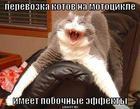 https://lolkot.ru/2008/09/07/perevozka-kotov-na-mototsikle/