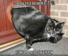https://lolkot.ru/2008/09/20/zagruzka-fayla-73/