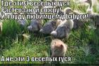 https://lolkot.ru/2013/06/19/3-vesyolyh-gusya/