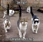 https://lolkot.ru/2008/06/07/zakurit-est/