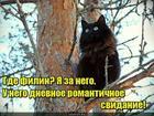 https://lolkot.ru/2017/06/01/a-gde-filin/