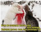 https://lolkot.ru/2013/03/24/a-ho-ho-ne-ho-ho/