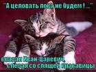 https://lolkot.ru/2012/06/14/a-tselovat-poka-ne-budem/