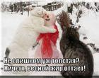 https://lolkot.ru/2013/11/05/a-ved-pohudeyet/