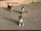 https://lolkot.ru/2010/09/10/a-yesli-naydem/