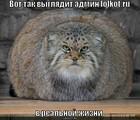 https://lolkot.ru/2010/08/09/admin-lolkot-ru-2/