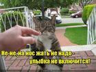 https://lolkot.ru/2018/05/29/aktivatsiya-ulybaki/