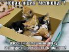 https://lolkot.ru/2010/04/18/aktsiya-melkopuz/