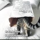 https://lolkot.ru/2020/06/21/aktualnaya-ekipirovka/