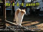 https://lolkot.ru/2014/05/07/allyarm/