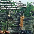 https://lolkot.ru/2017/02/23/alternativnaya-kontsovka/