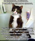 https://lolkot.ru/2013/04/16/amyoba/