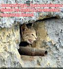 https://lolkot.ru/2013/09/14/anka-pulemyotchitsa/