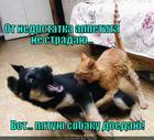 https://lolkot.ru/2013/09/06/appetit-zalog-zdorovya/