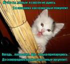 https://lolkot.ru/2014/11/06/argumenty/