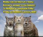 https://lolkot.ru/2015/10/19/avtory-v-shoke/