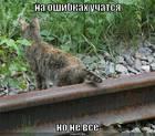 https://lolkot.ru/2008/06/26/na-oshibkah-uchatsya/