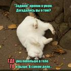 https://lolkot.ru/2016/06/28/balans-uma/