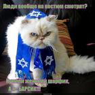 https://lolkot.ru/2014/07/11/barsik-5/