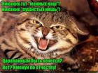https://lolkot.ru/2017/09/17/barsikovich/