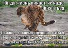 https://lolkot.ru/2013/04/07/begi-lola-begi-s/