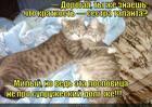 https://lolkot.ru/2013/03/02/bestalannyy/
