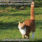 https://lolkot.ru/2010/04/19/bezhit-i-hohochet/
