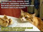 https://lolkot.ru/2015/08/22/bezotkaznyy-sposob/