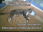 https://lolkot.ru/2013/02/26/binokulyarnoye-zreniye/