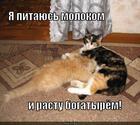 https://lolkot.ru/2012/11/27/bogatyr/