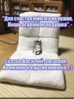 https://lolkot.ru/2017/06/14/bolshoye-schaste-malenkogo-kota/