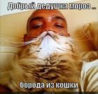 https://lolkot.ru/2012/11/24/boroda-iz-koshki/