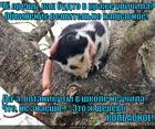 https://lolkot.ru/2014/02/14/botanik-2/