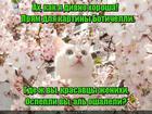 https://lolkot.ru/2016/07/22/botichelliyevskaya-krasa/