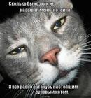 https://lolkot.ru/2012/08/04/brutalnyy-surovyy-macho/