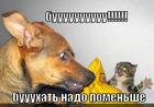 https://lolkot.ru/2012/12/31/buuuuuuuuuu/