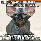 https://lolkot.ru/2012/08/14/byla-allergiya/