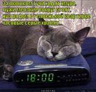 https://lolkot.ru/2012/09/22/chasovyye/