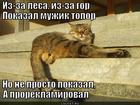 https://lolkot.ru/2013/11/13/chastushechnaya/