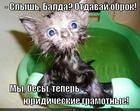 https://lolkot.ru/2014/12/06/chertovy-yuristy/