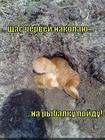 https://lolkot.ru/2014/04/21/chervovyy-korol/