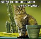 https://lolkot.ru/2013/03/24/chto-eto-bylo-2/