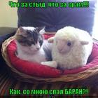 https://lolkot.ru/2012/09/24/chto-za-styd/