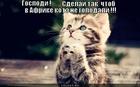 https://lolkot.ru/2012/01/07/chtob-kote-ne-golodali/
