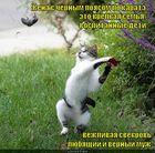 https://lolkot.ru/2012/07/11/chyornyy-poyas-po-karate/