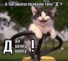 https://lolkot.ru/2011/05/12/day-duraku-dorogu/