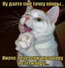 https://lolkot.ru/2013/02/11/dayte-tochku/