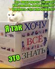 https://lolkot.ru/2018/05/21/dayte-znat/