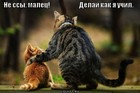 https://lolkot.ru/2012/04/13/delay-kak-ya-uchil/