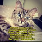 https://lolkot.ru/2014/01/31/delovoy/